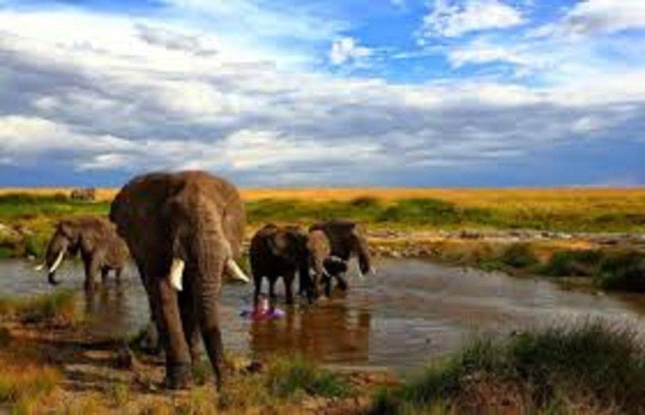 5-Day Masai Mara & Lake Nakuru Safari - Tour