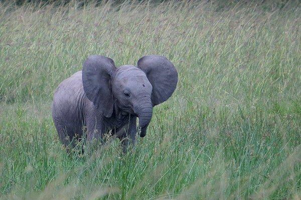 Classic Kenya Safari - Tour