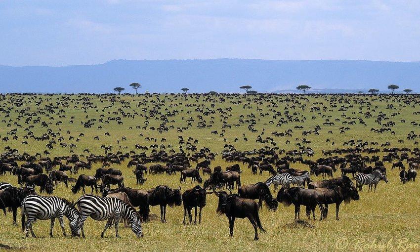 Classic Kenya Safari (Migration Special) - Tour
