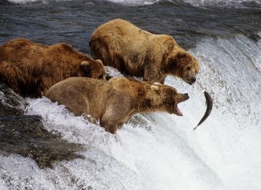 Amazing Alaska - Tour