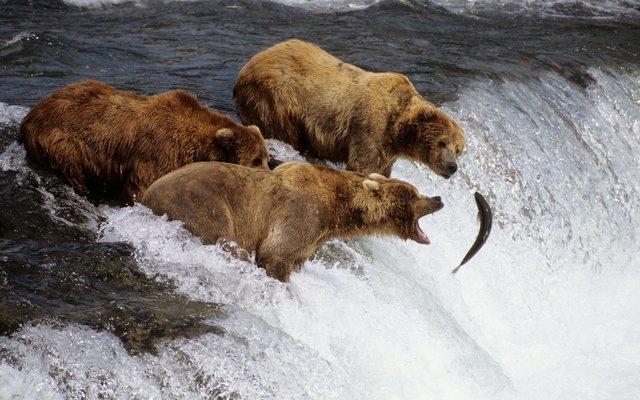 Amazing Alaska - 4N/5D - Tour