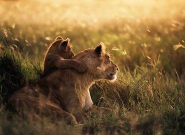 Best of Kenya Safari - Tour