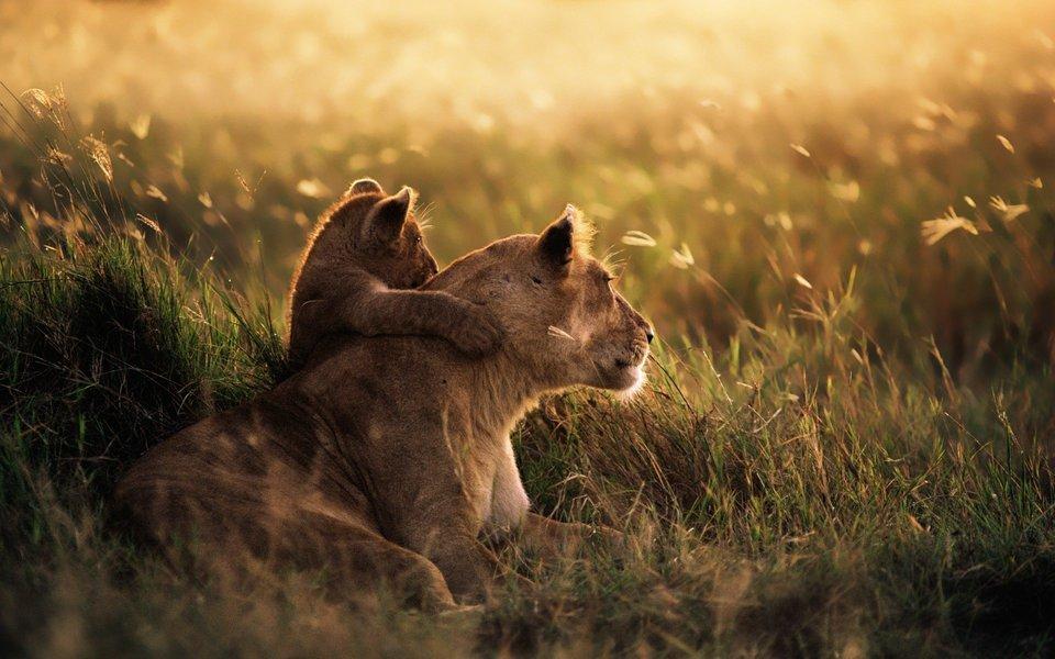 Best of Kenya Safari-7D|6N - Tour