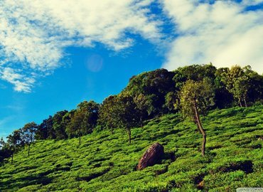 God's Own Country – Kerala Package - Tour