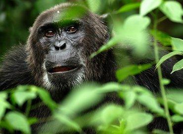 Rwanda - Gorilla & wildlife Safari Package - Tour
