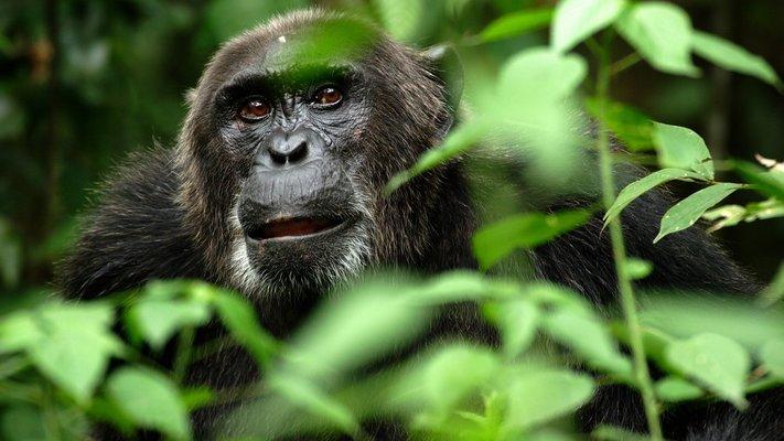 Rwanda - Gorilla & wildlife Safari -8D|7N - Tour