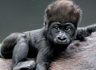 Rwanda-Gorilla trekking Packages - Tour