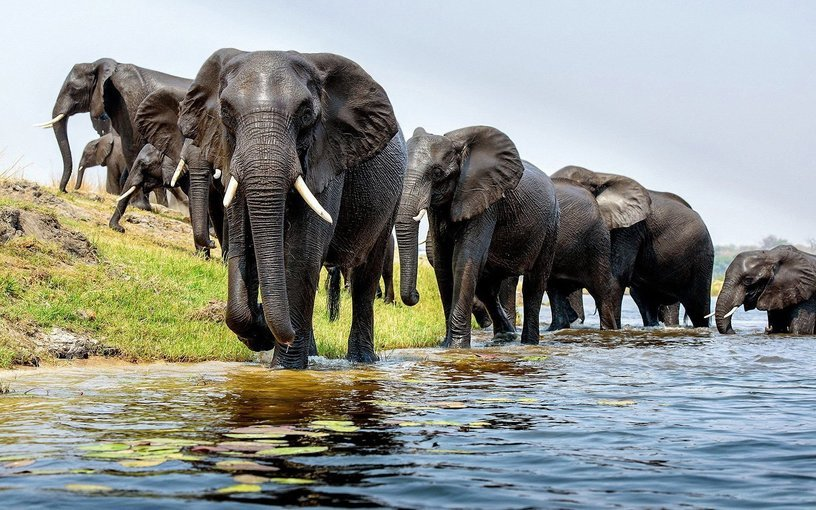 Tanzania Budget Lodge Safari-5D|4N - Tour