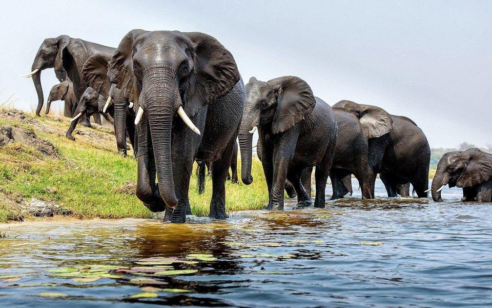 Tanzania Budget Lodge Safari-5D|4N - Tour
