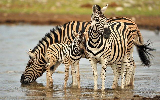 Tanzania Budget Safari-4D|3N - Tour