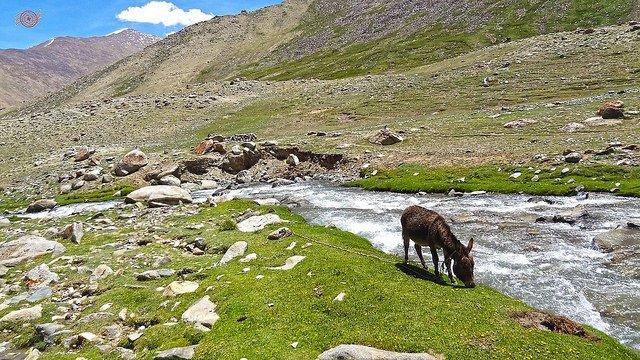 6N/7D Trip To Leh Ladakh - Tour