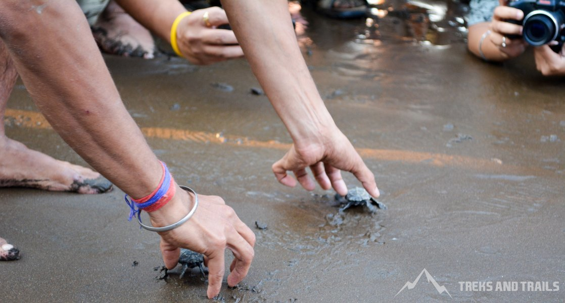 Velas Turtle Festival 2019 from Mumbai - Tour
