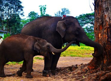 Dubare Elephant Camp - Coorg - Tour