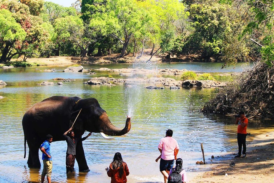 Dubare Elephant Camp with bird watching - Tour