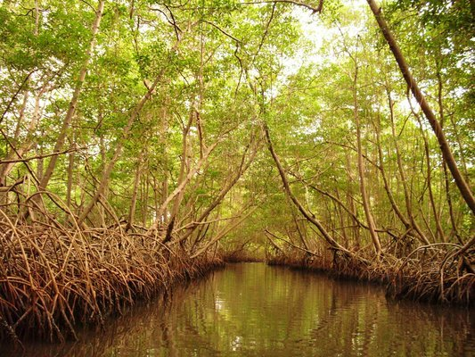 Caroni Wetlands Sunset Boat Tour - Tour