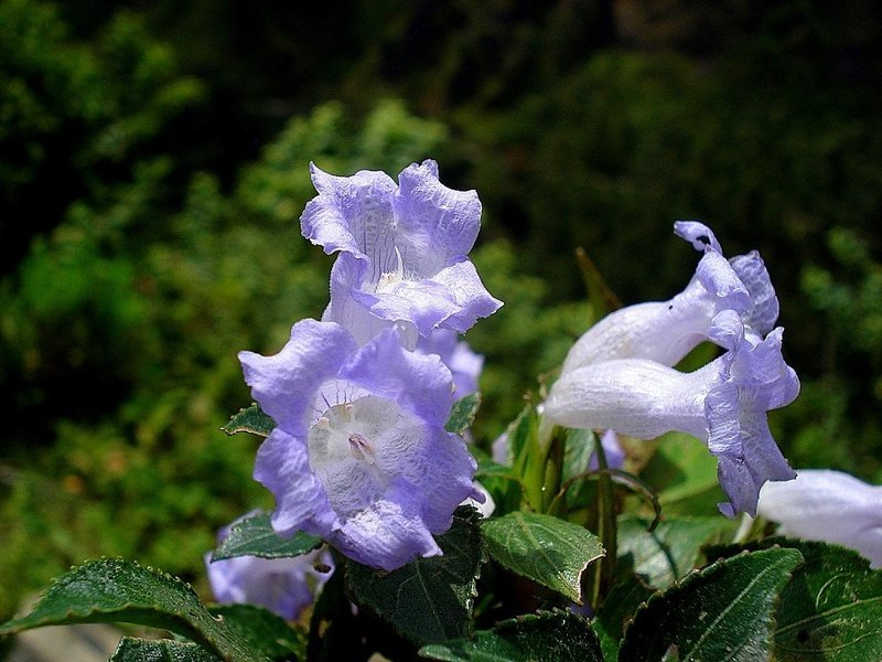 Neelakurinji Munnar Holiday - Tour