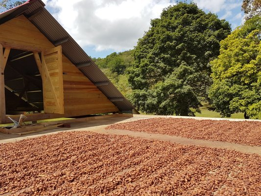 Trinidad Cocoa Plantation Experience - with Chocolate! - Tour