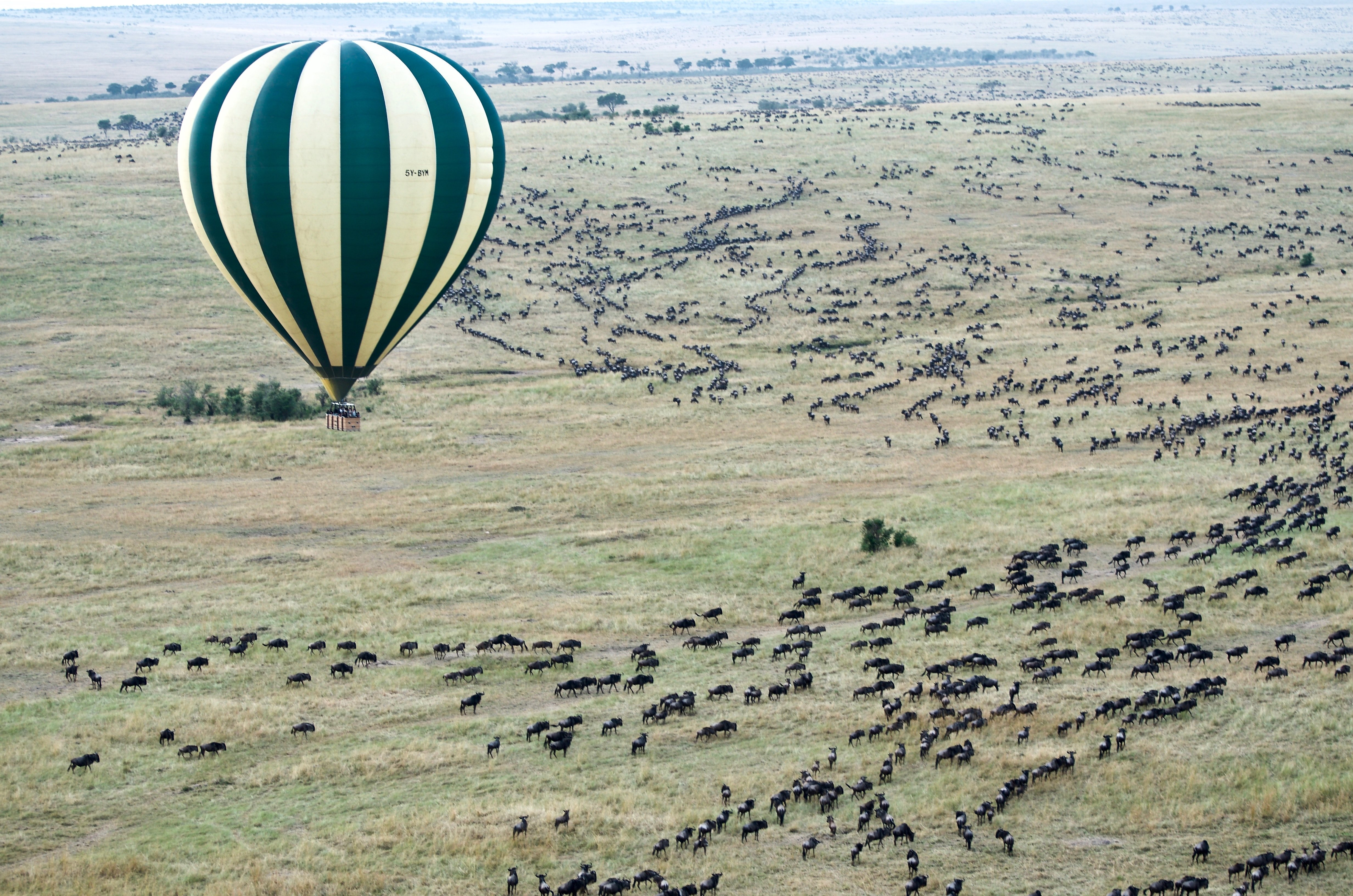 serengeti_balloon_safari.jpg - description