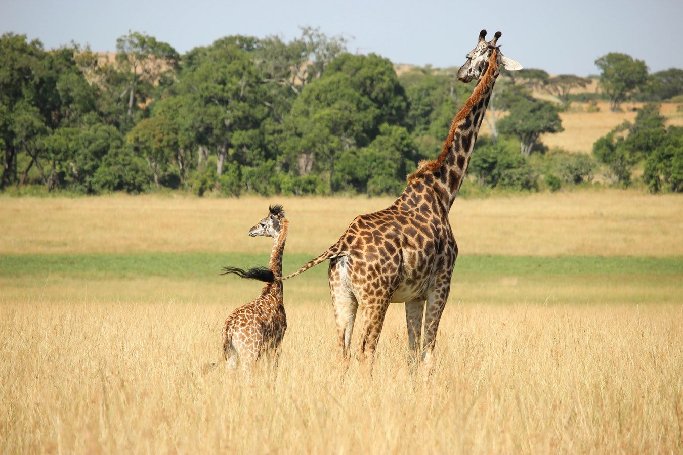 Arusha_national_park_safari.jpeg - description