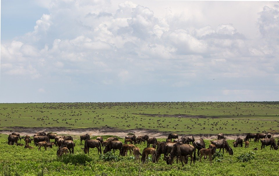 Serengeti_plains.jpg - description