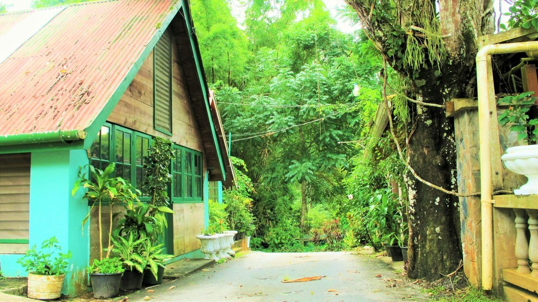 Asa Wright Nature Centre/Caroni Bird Sanctuary - Tour