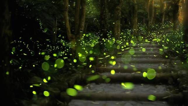 Rajmachi Fireflies Trek and Camping - Tour