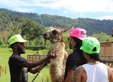 Eco Safari Park - A petting zoo experience! - Tour