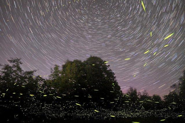 Fireflies Event Maharashtra - Collection