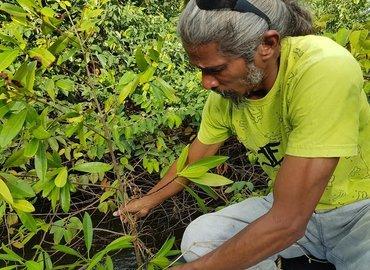 An Environmental Restoration Experience at Nariva Swamp - Tour