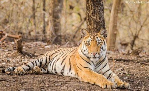 Dudhwa Wildlife Safari