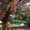 Rajmachi_camping_2017
