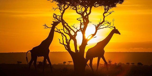 Kenya|Tanzania... - Collection