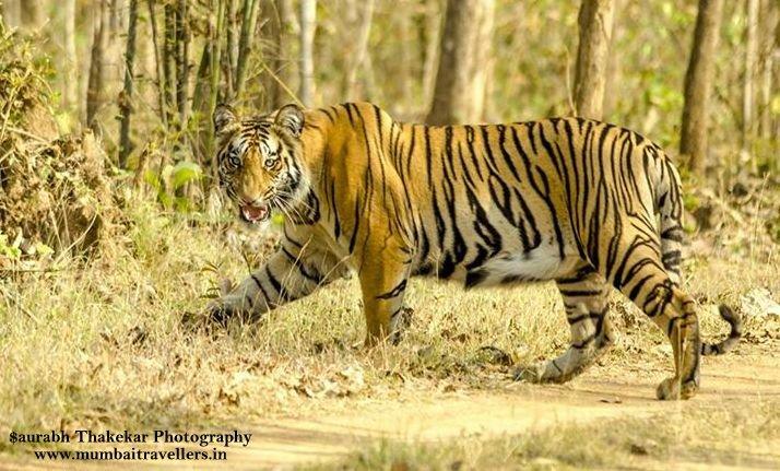 Nagzira Wildlife Safari - Tour