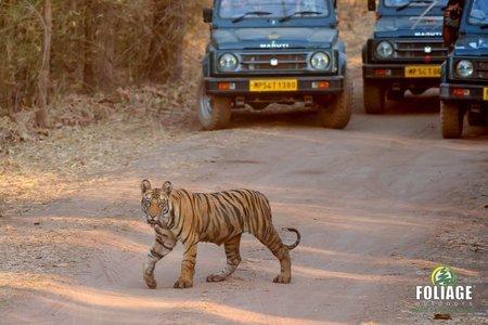 Bandhavgarh Wildlife Camp