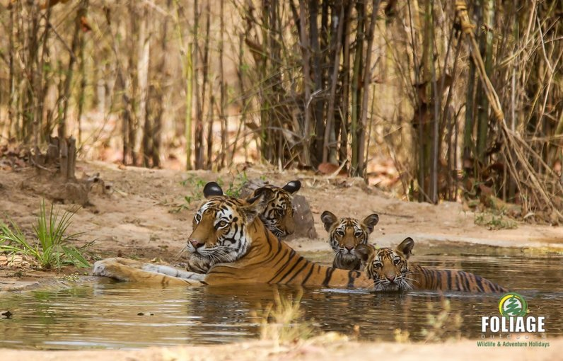 Bandhavgarh Wildlife Camp (18-22 years) - Tour