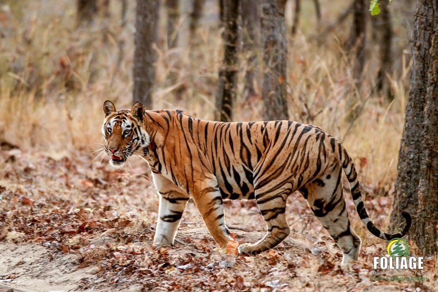 Tadoba Wildlife Camp - Tour