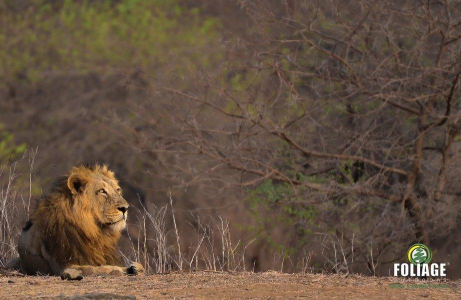 Gir Wildlife Camp - Tour