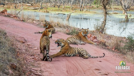 Ranthambhore Wildlife Camp (Non AC Train Travel)