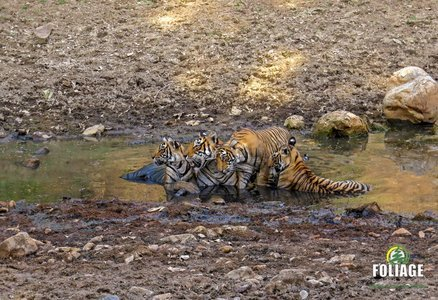 Ranthambhore Wildlife Camp (AC Train Travel)