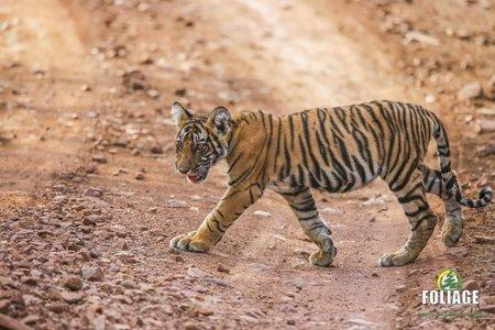 Ranthambhore Wildlife Camp (By Flight)
