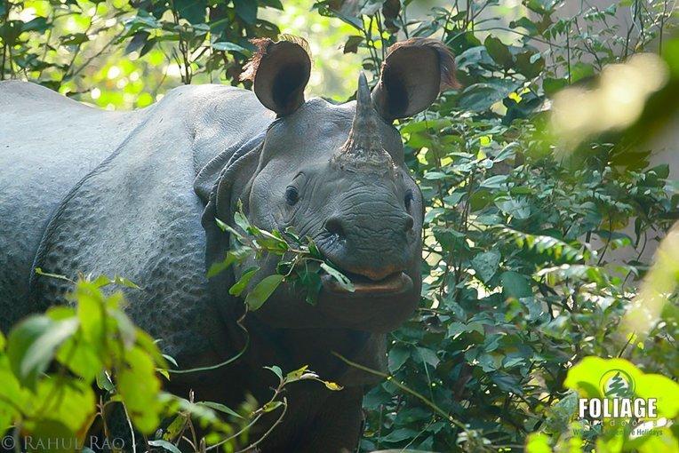 Dudhwa Wildlife Camp - Tour
