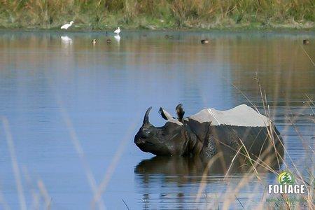 Kaziranga Wildlife Camp